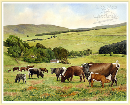 Gloucester herd by Anthony Forster click for details