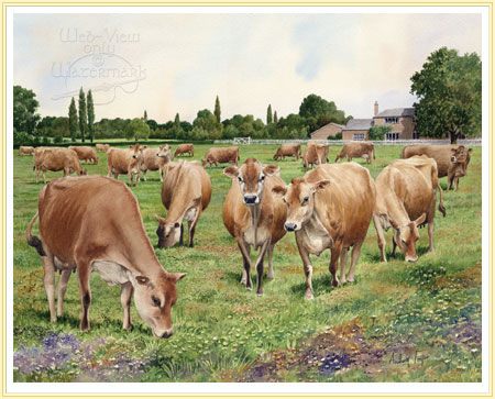 Jersey cows by Anthony Forster