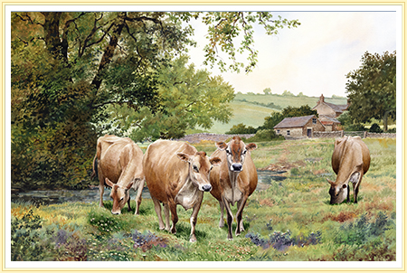 Jersey Cattle picture, Click for details-etc.